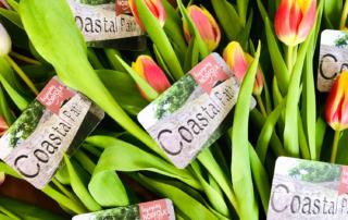 Enjoying Norfolk Cards and Tulips.